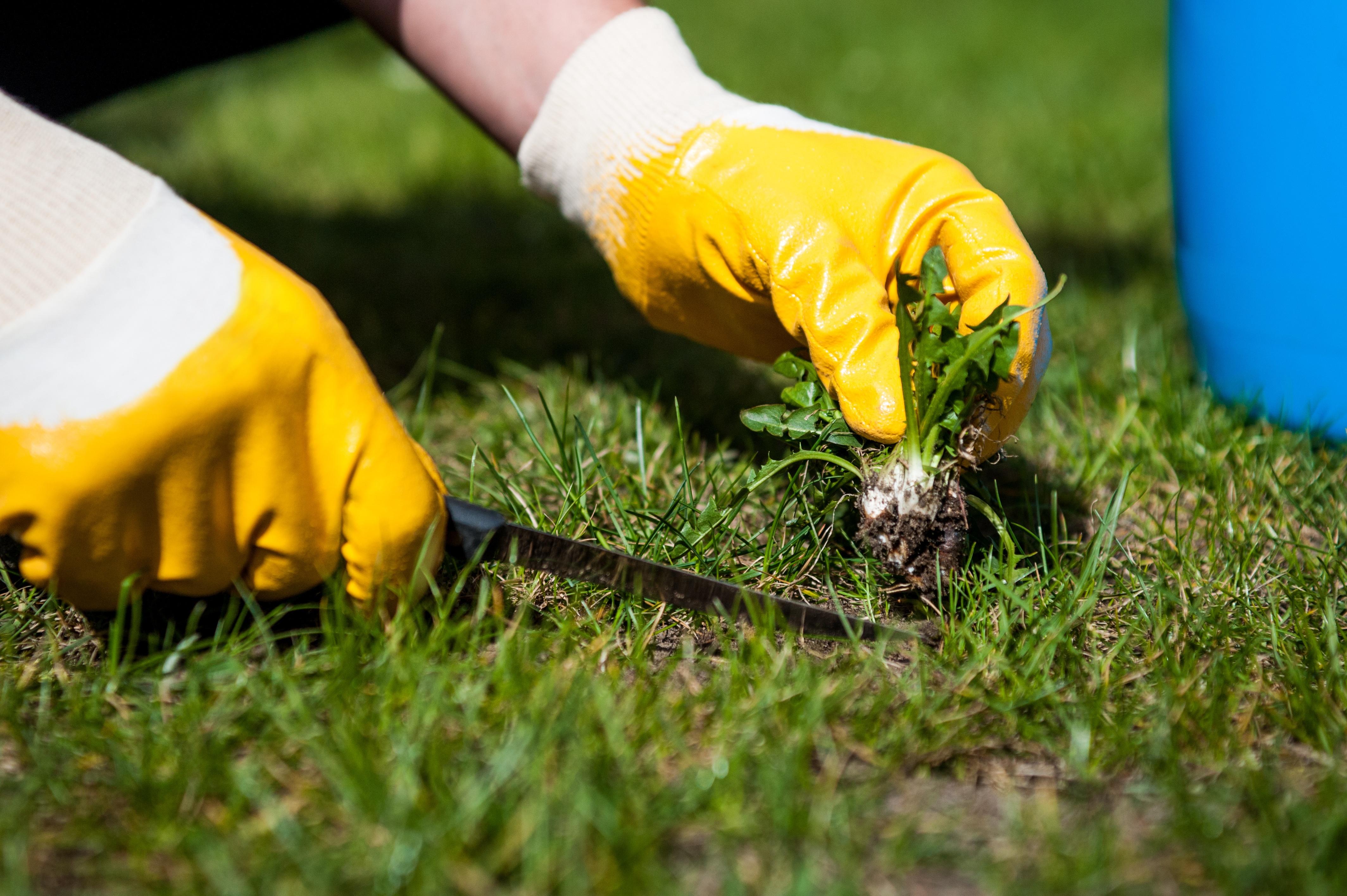 lawn maintenance austin tx