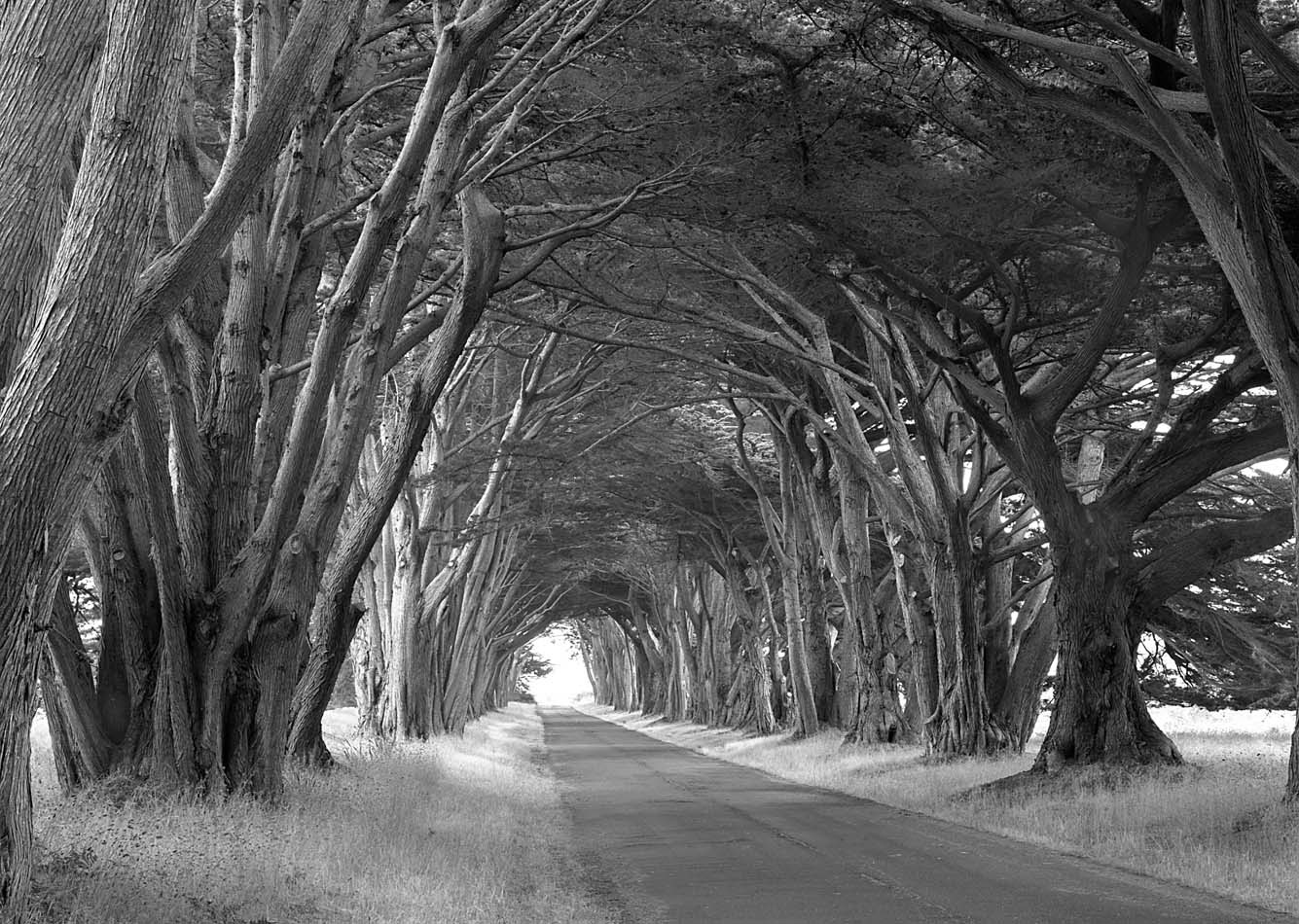 Point Reyes Road