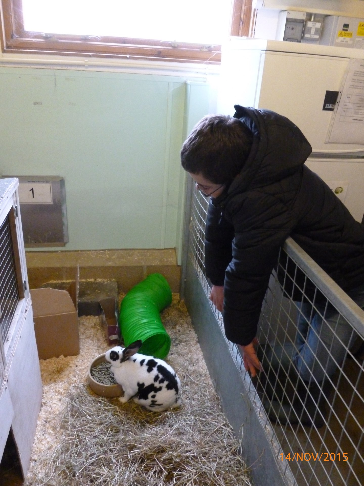 We enjoyed meeting the rabbits and guinea pigs  Animal Experience - College of West Anglia