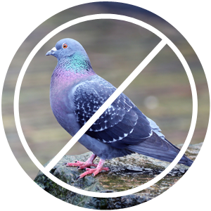 Bird Control Los Angeles | Pigeon Control Products | Pigeon