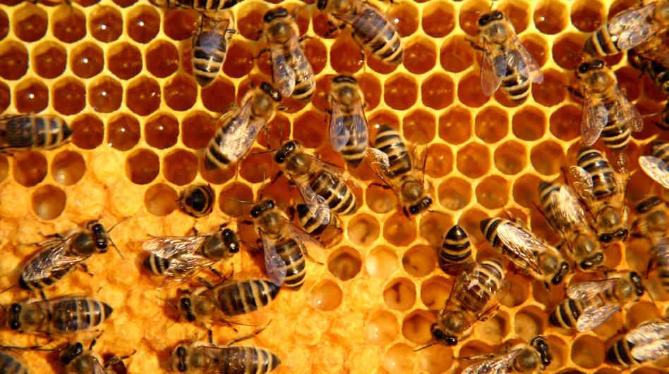 honeycomb_wide.jpg