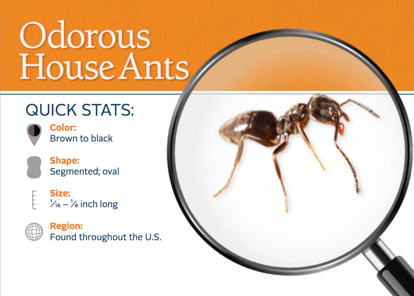 https://0201.nccdn.net/1_2/000/000/0d8/43a/House-Ant.png