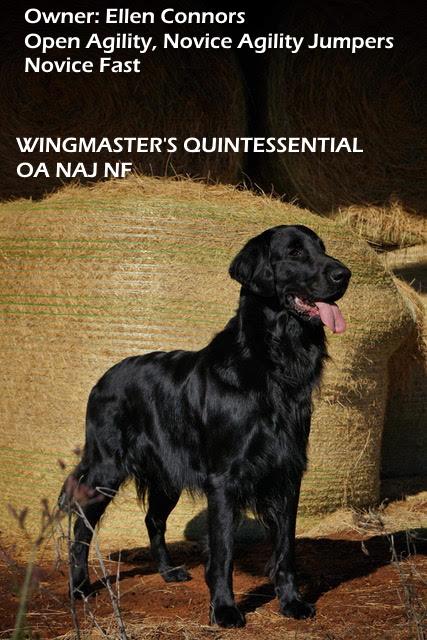 https://0201.nccdn.net/1_2/000/000/0d9/38a/Wingmaster-s-Quintessential.jpg