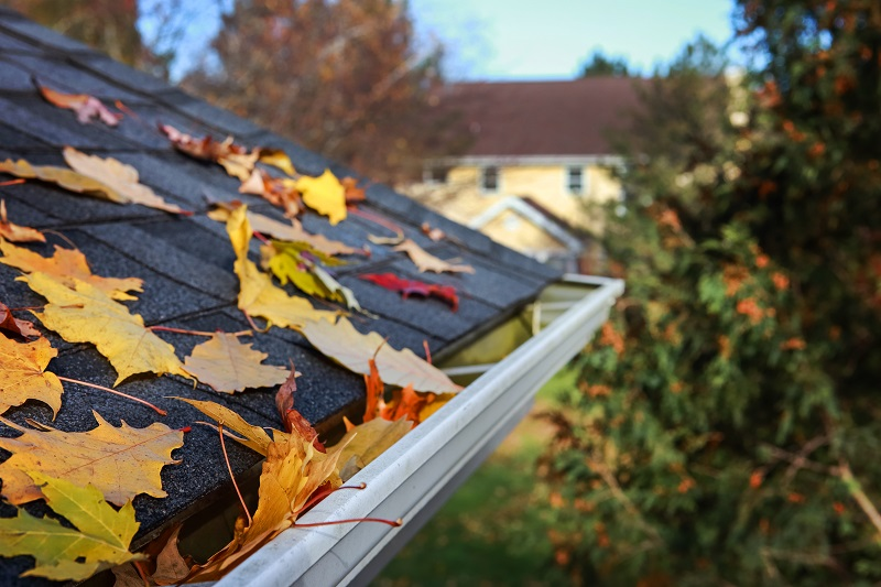 Leaves on Roof in Fall