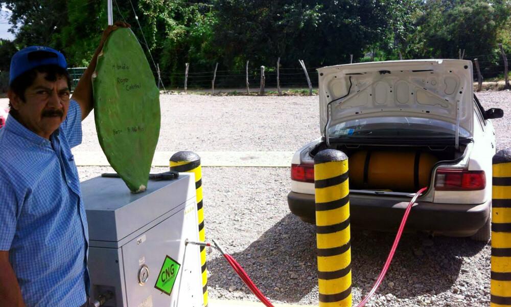 Carga de gasolina orgánica de nopal a vehículo