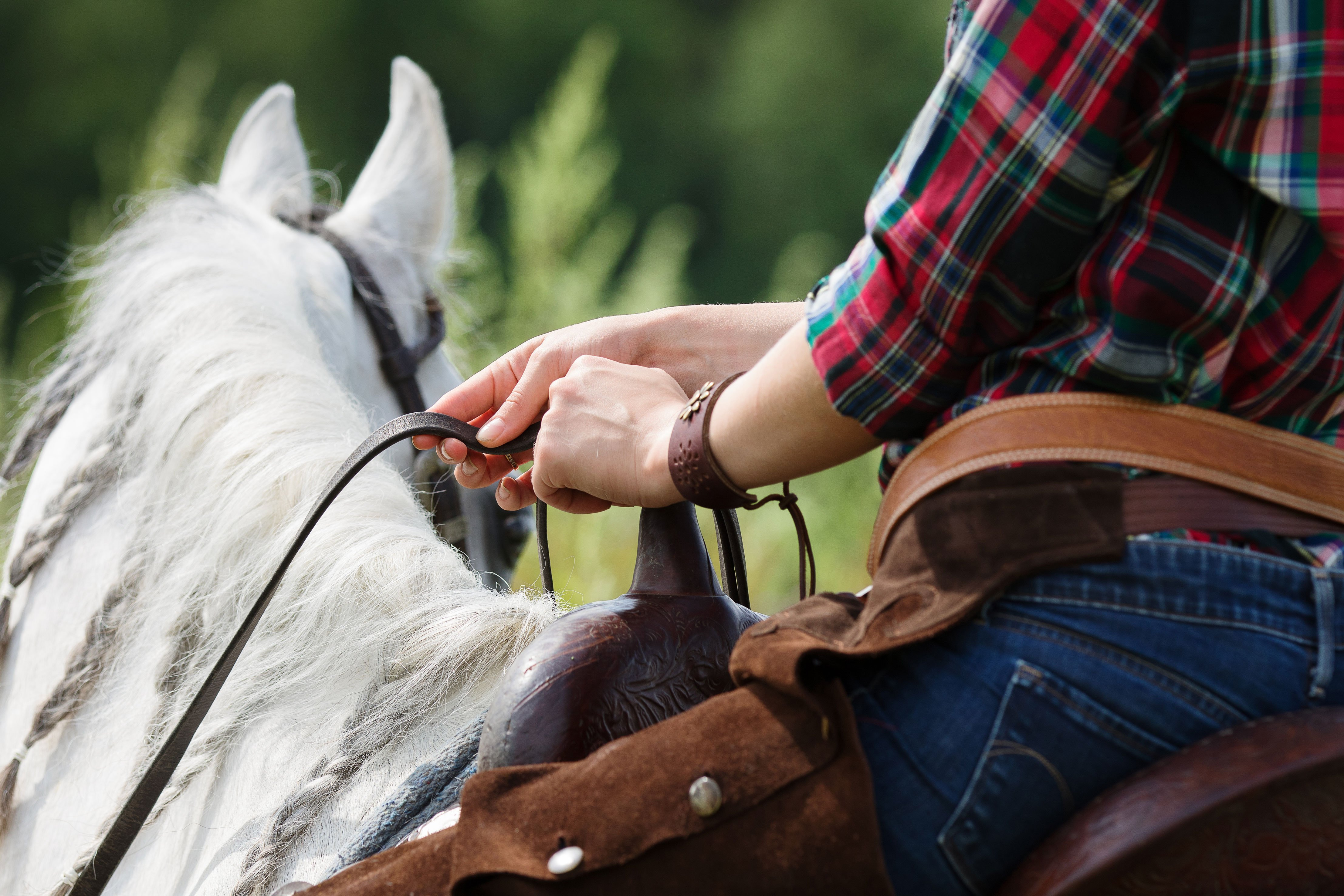 Choose Our Horse Products