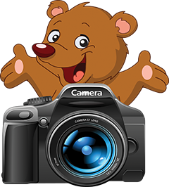 The Bear Hiding Behind The Camera||||
