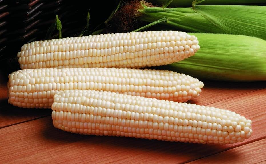 1,000 seeds   Need More Ask Bicolor Corn Ambrosia