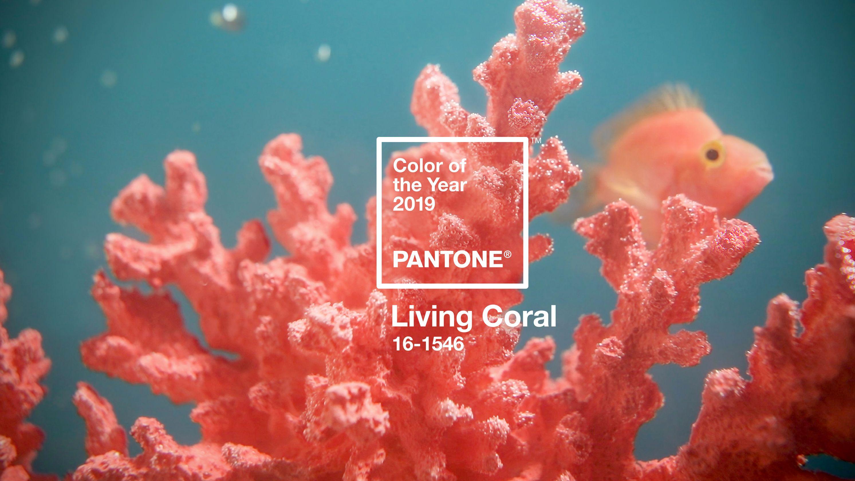 https://0201.nccdn.net/1_2/000/000/0de/37c/living-coral.jpg
