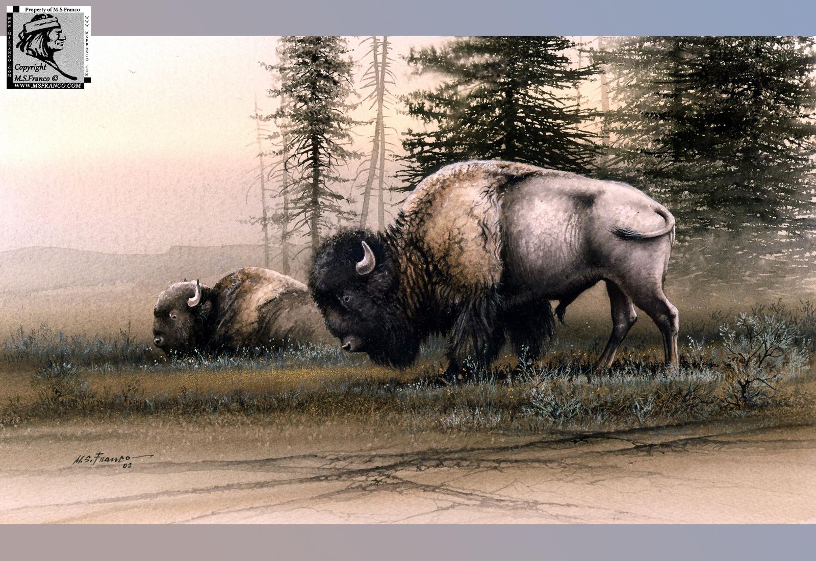 """American Bisonte"""