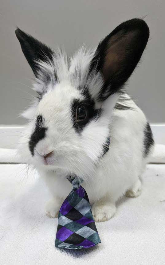 Bunny With a Tie
