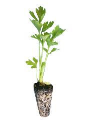 Micro hierbas