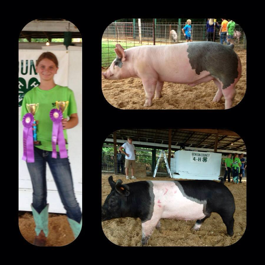 Amber Collins Benton County Fair Champion & Reserve