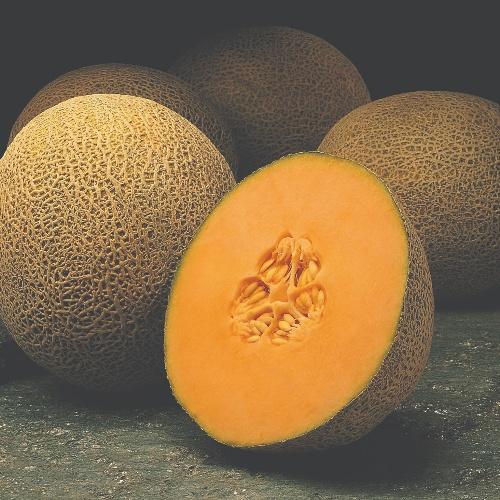 Melon Primo