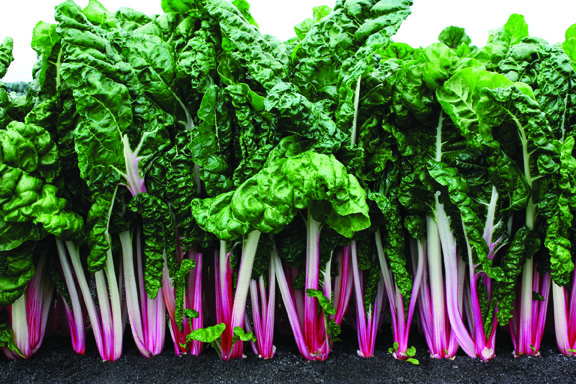 Swiss Chard Peppermint