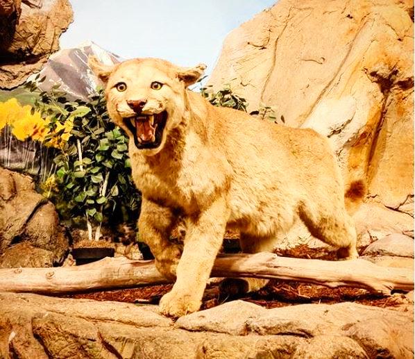 Petaluma Wildlife Museum