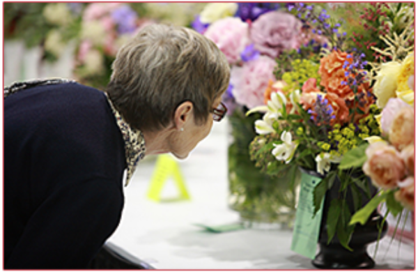 Our Rose Show displays a rainbow of colour and fragrance that attracts hundreds of visitors.