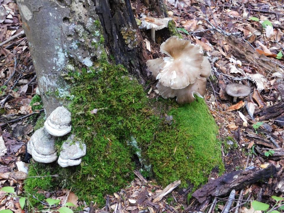 https://0201.nccdn.net/1_2/000/000/0e2/625/Fungi---12--960x720.jpg