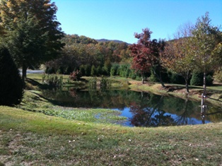 One of our ponds beside our barn.