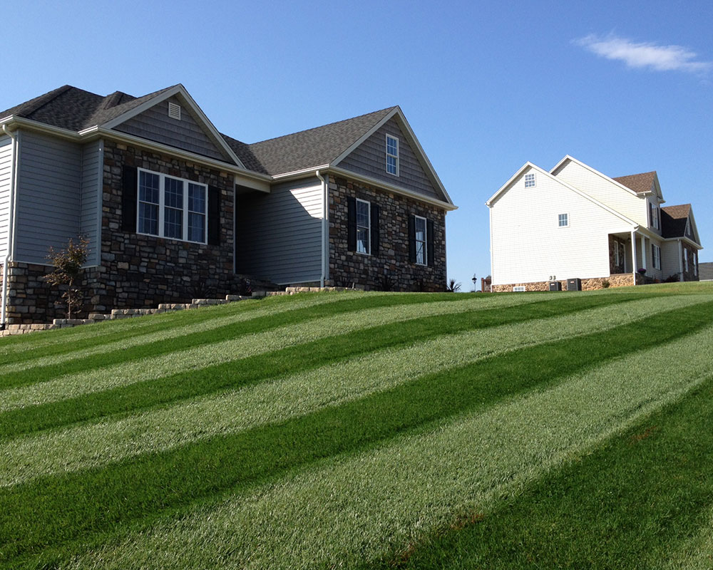 The Hogan Blend Turf-Type Tall Fescue in Virginia