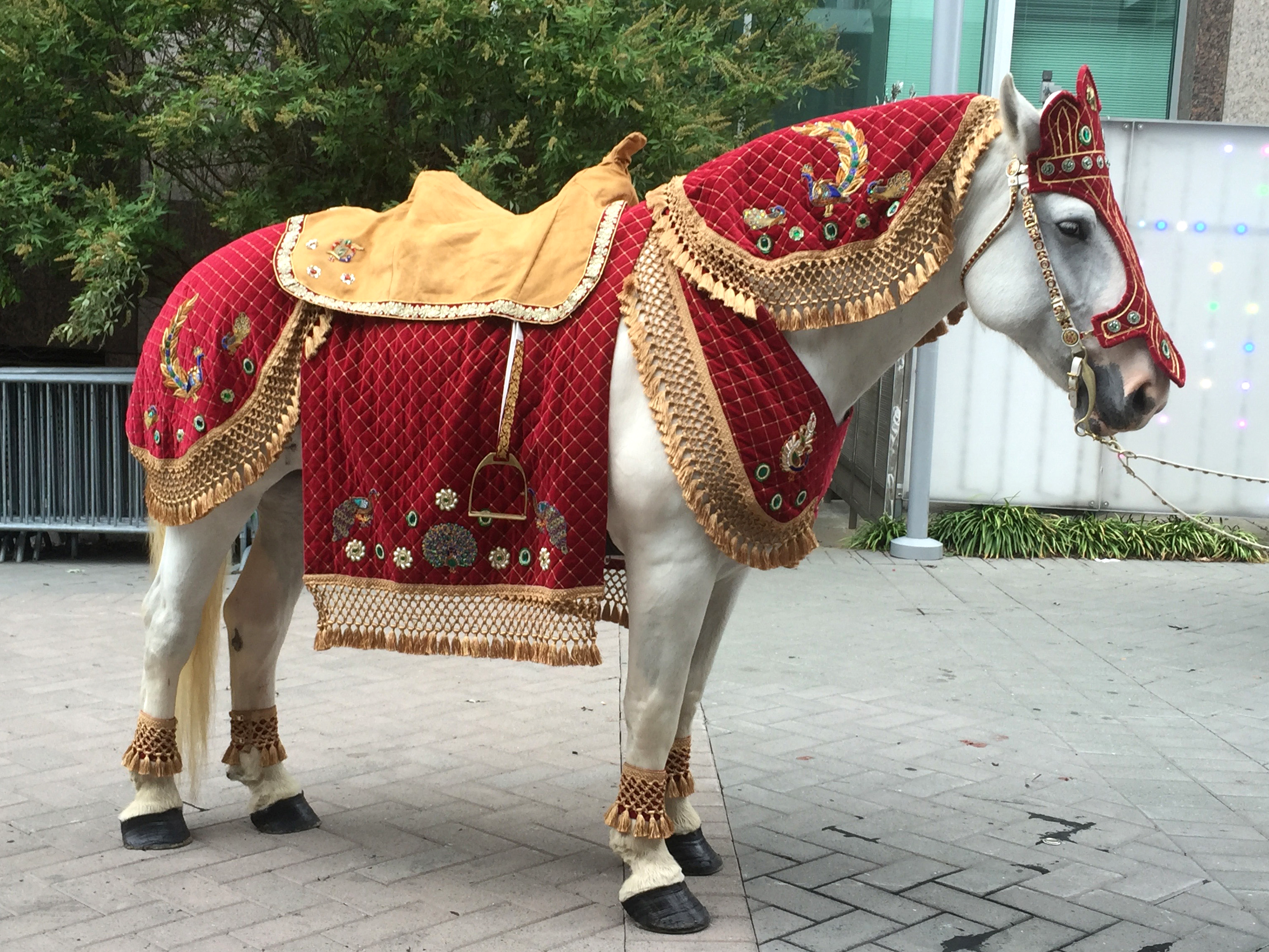 https://0201.nccdn.net/1_2/000/000/0e4/43b/horse-dressed-for-indian-wedding.png