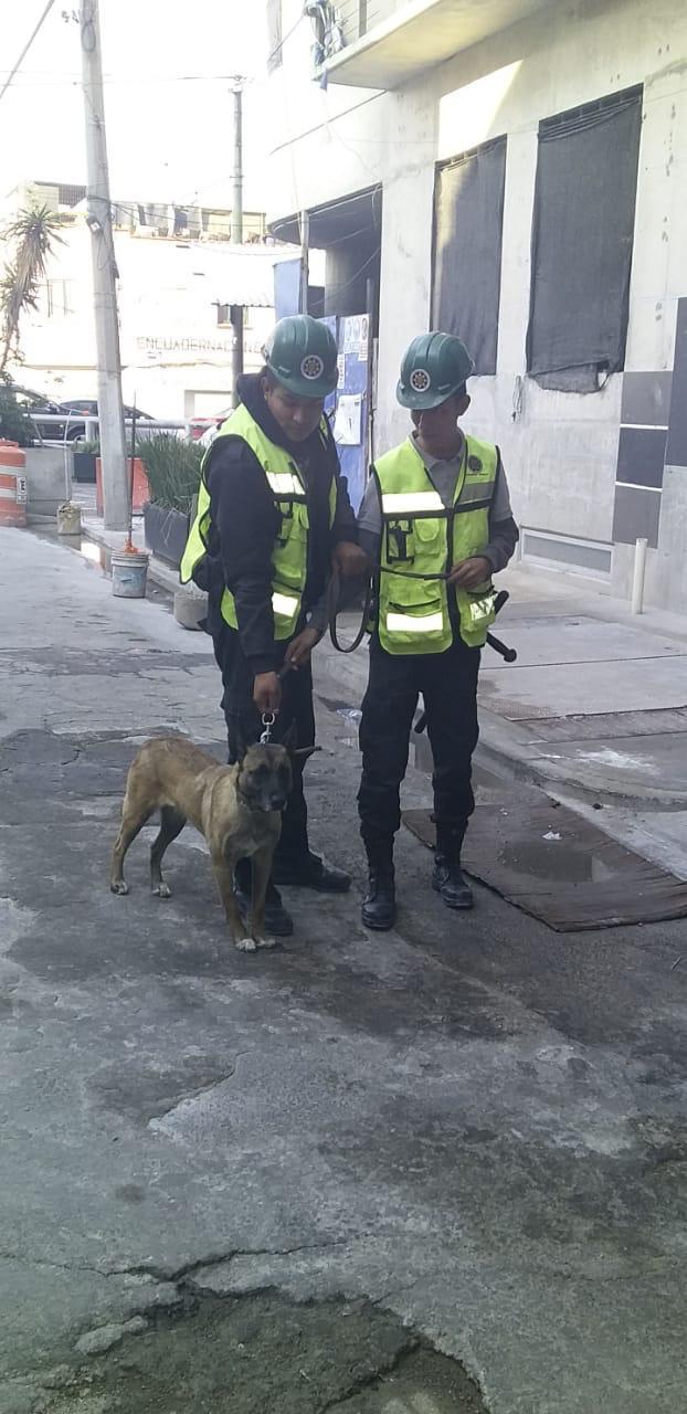 Binomio Canino