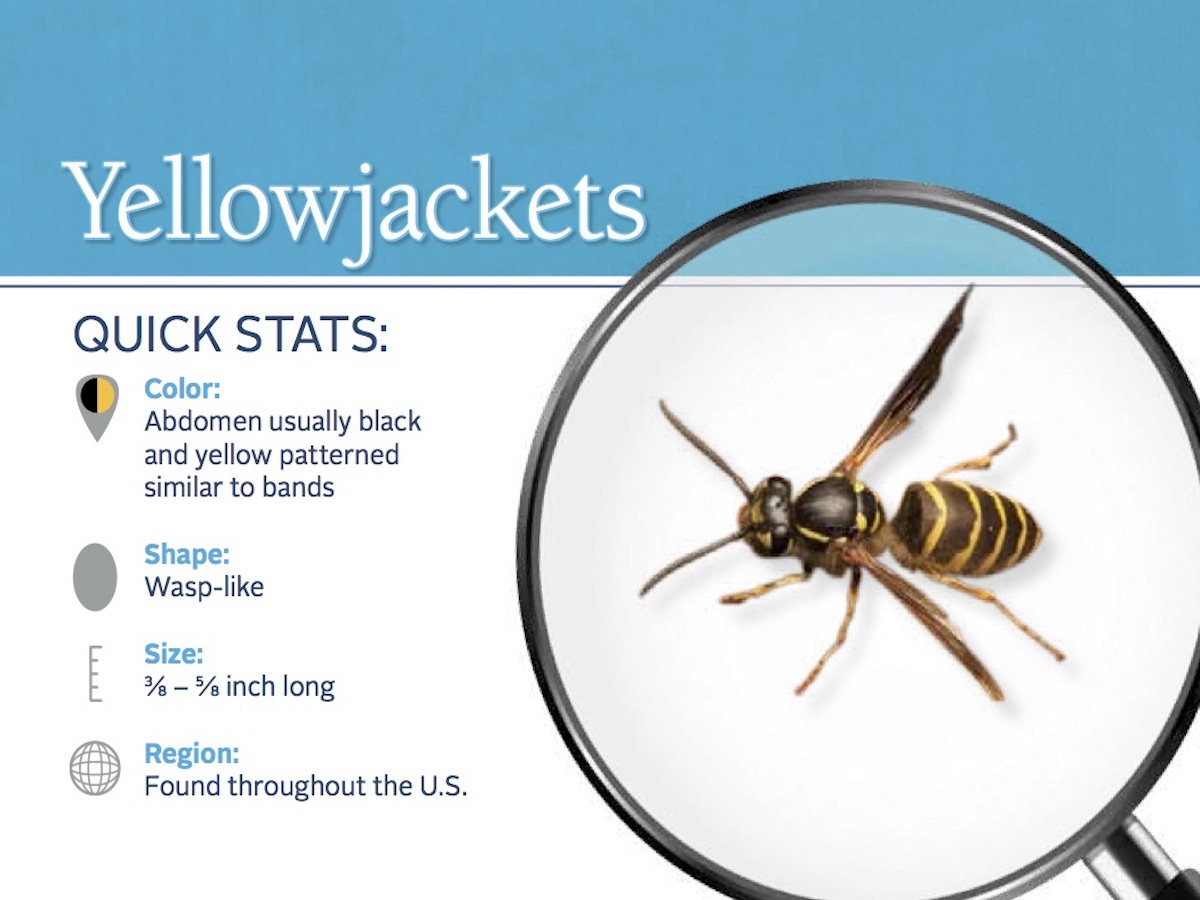 https://0201.nccdn.net/1_2/000/000/0e4/757/yellowjacket-pest-id-card_front.jpg
