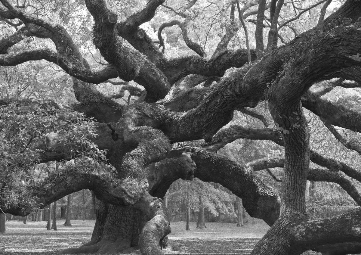 Angel Oak View