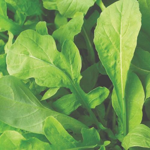 Greens Arugula Astro