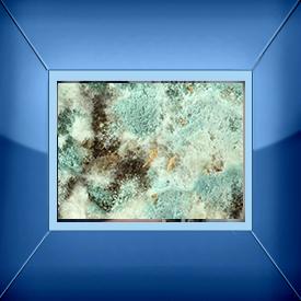 Mold Sampling