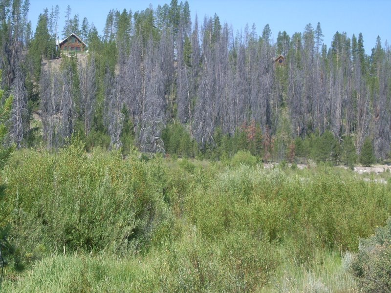 Insect Outbreak in the Stanley Basin