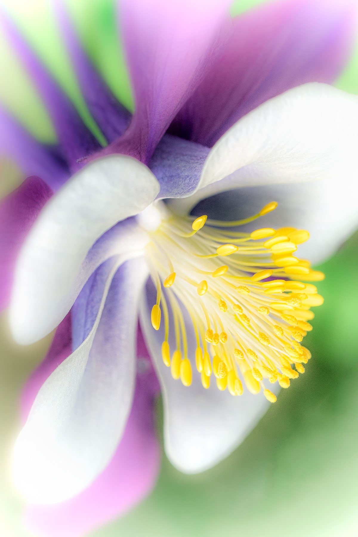 Plume Bloom
