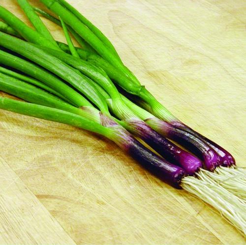 Onion Red Baron Bunching