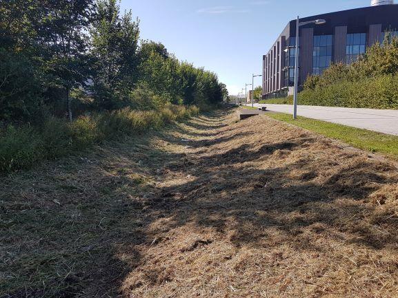 https://0201.nccdn.net/1_2/000/000/0ec/bed/grass-cutting---cambridgeshire.jpg