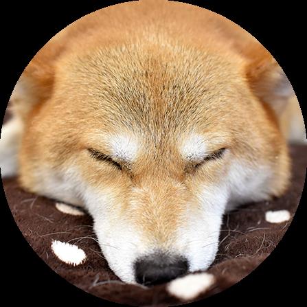 Dog Sleeping Up