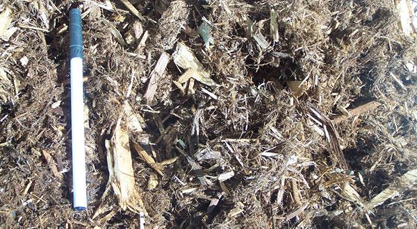 1-105 - Cascade Cedar