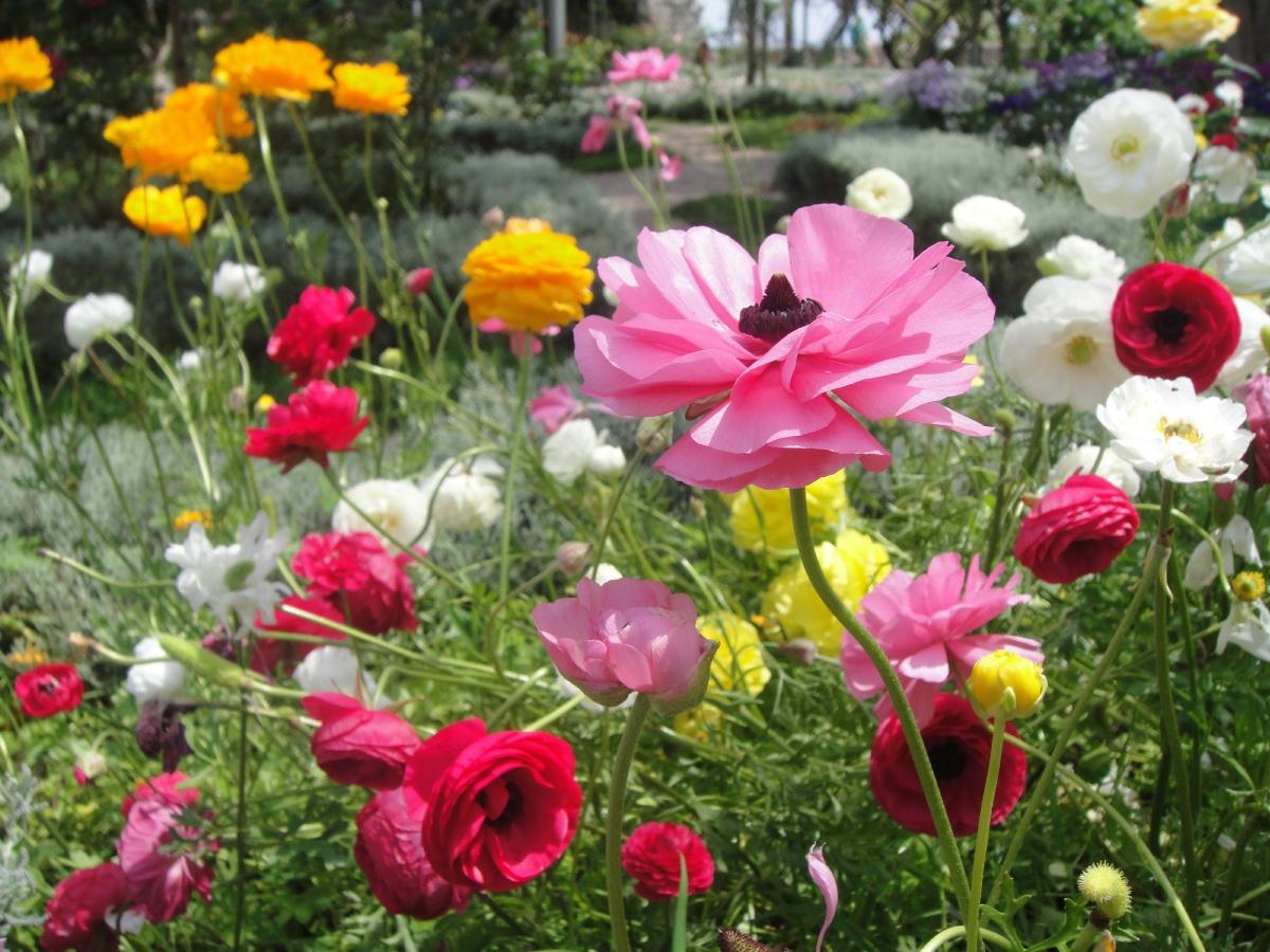 Beautiful Garden Planting