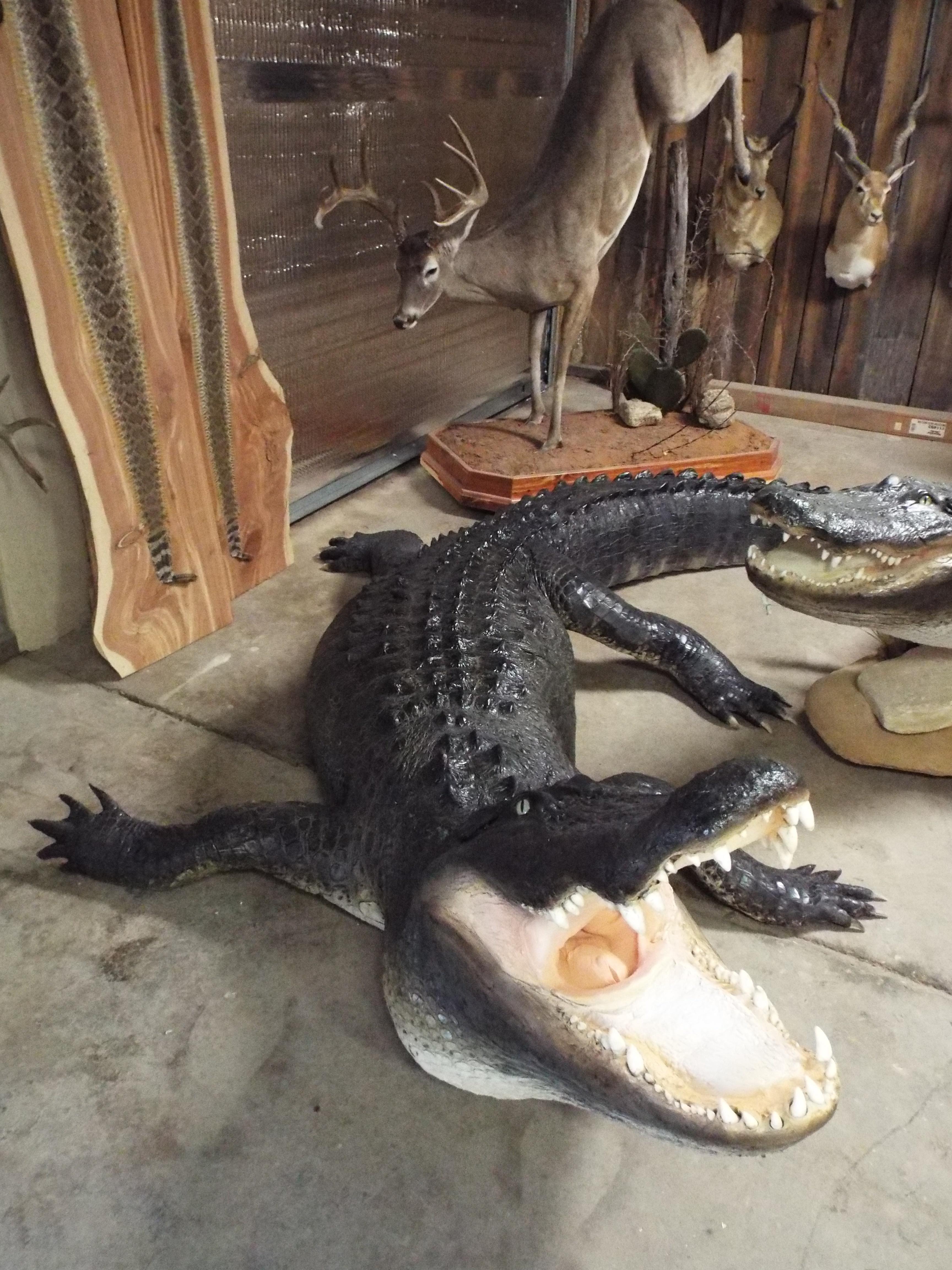 https://0201.nccdn.net/1_2/000/000/0f2/9d0/gators-044-3456x4608.jpg