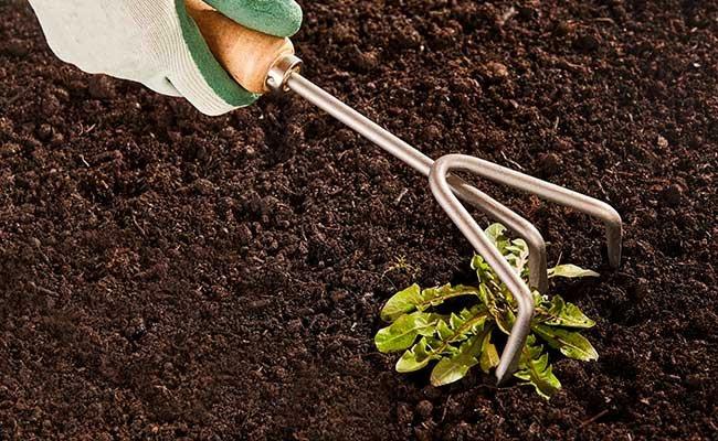 Gardener Weeding A Flowerbed