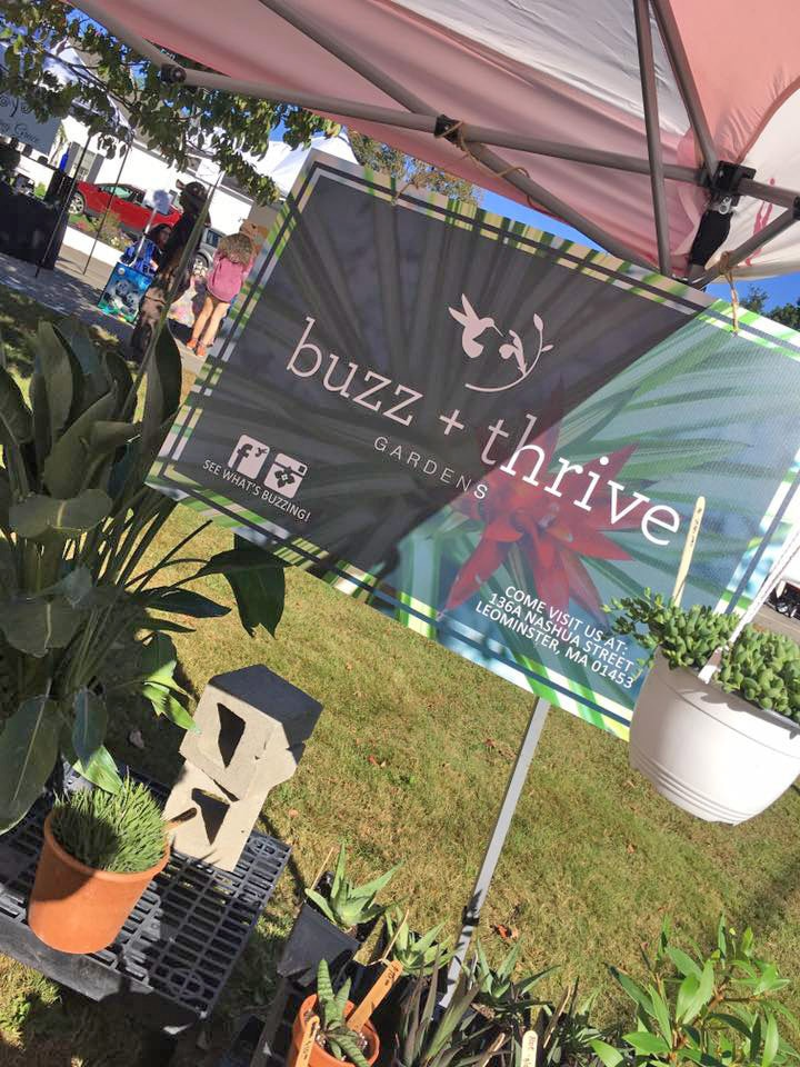 Buzz and Thrive Gardens