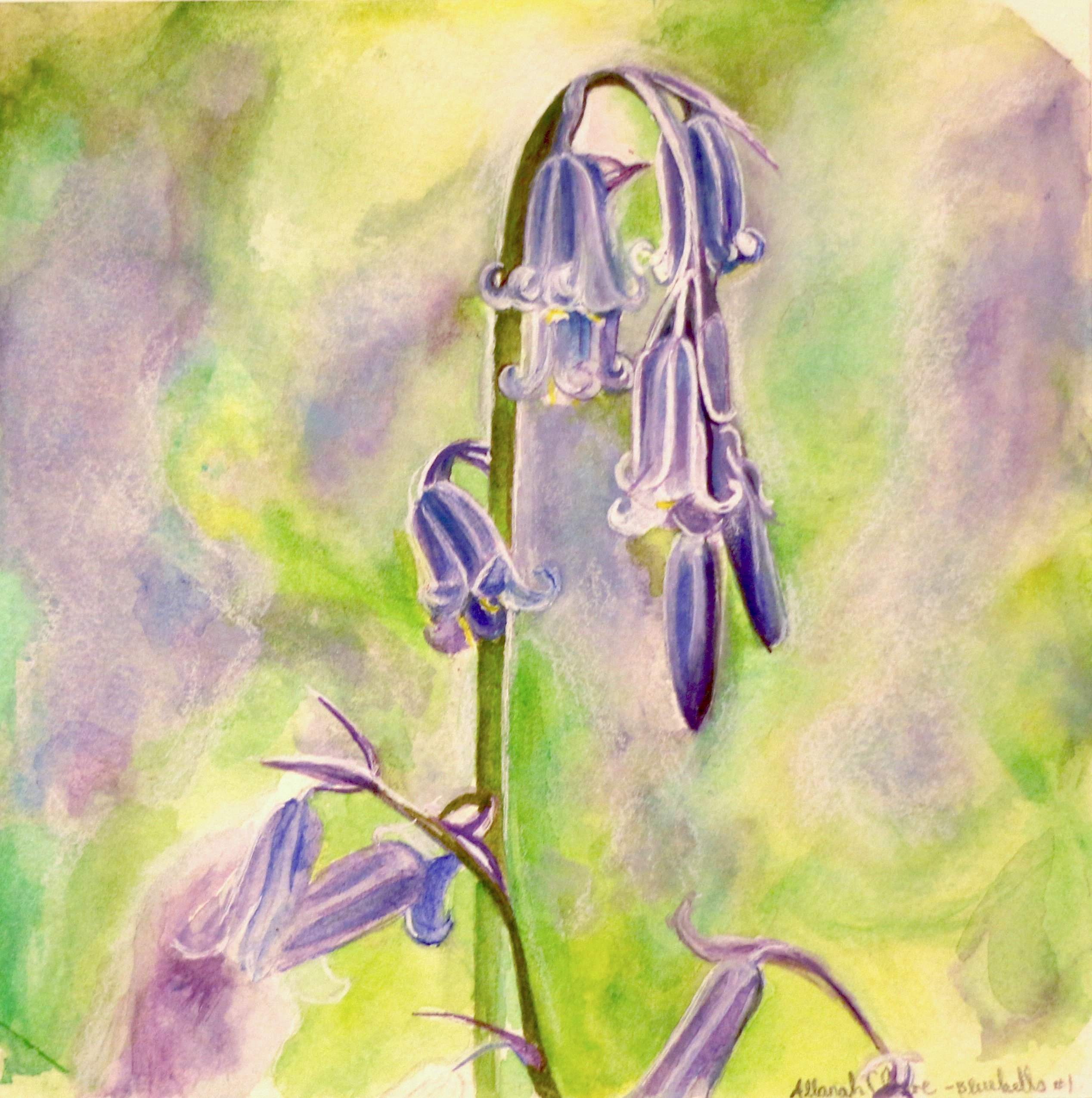 Bluebell Study, Watercolour.