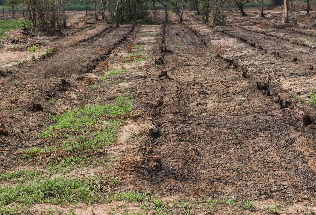 Effects of Chemical Fertilizers On  Soil