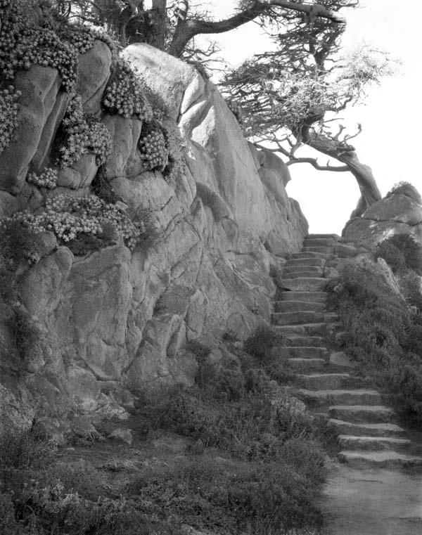 Point Lobos Path