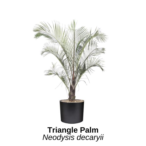 https://0201.nccdn.net/1_2/000/000/0fb/733/triangle-palm.png
