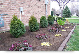 Plants and Shrubs