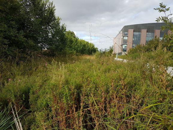 https://0201.nccdn.net/1_2/000/000/0fc/ef7/grass-cutting---cambridgeshire---before.jpg