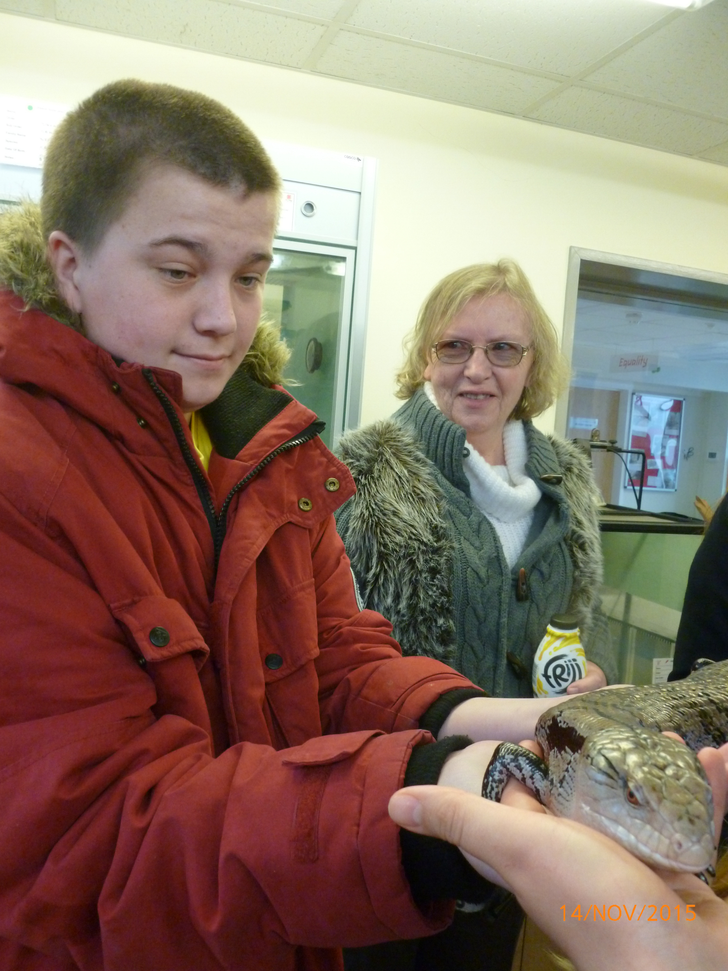 Holding a Blue-Tongue Skink Animal Experience - College of West Anglia