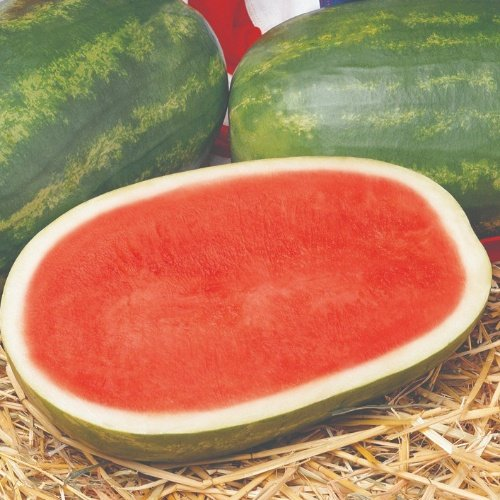 Watermelon Triploid - Revolution F1