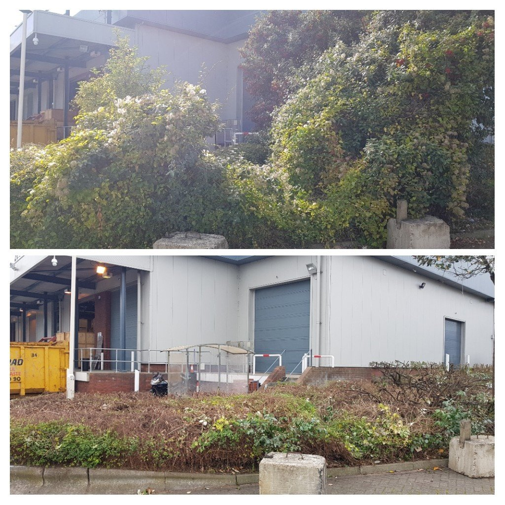 Before and after cutting back of overgrowth