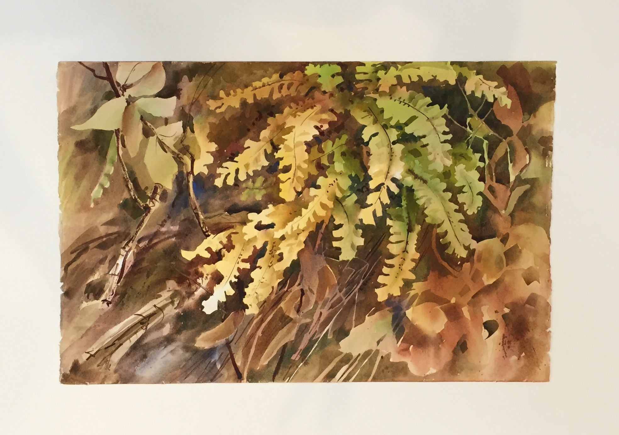 "Georgia Newton Maiden Hair Fern Watercolor 23"" X 15"" $100."